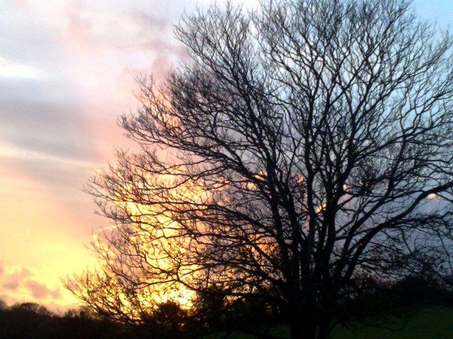 November Tree at Sunset